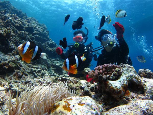 【59%OFF】沖縄の夏を先取り!2日間で取れるダイビングライセンスの紹介