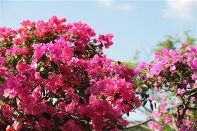 美しい花々が色鮮やかに咲き揃う!おきなわワールドにて「琉球花めぐ
