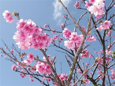 【2019年花めぐり】沖縄県内のお花畑スポットやお花のイベントま