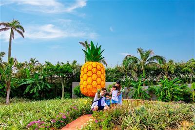 【沖縄県在住者限定】ナゴパイナップルパークで入園料が半額になる「